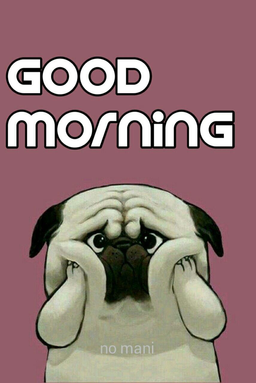 Good Morning Dog Funny : morning, funny, Morning, Animals