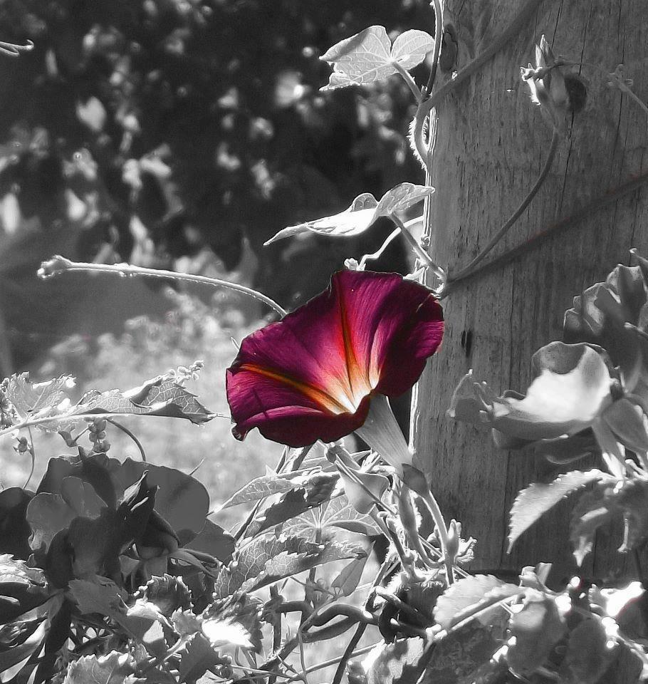 A single flower a single flower color splash