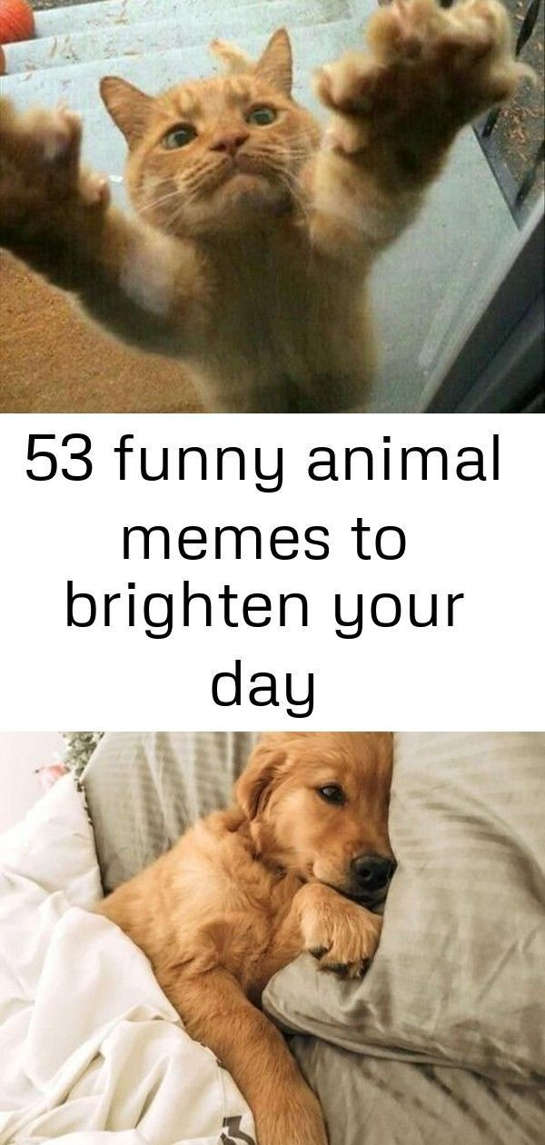 53 funny animal memes to brighten your day #albinoanimals 53 Funny Animal Memes To Brighten Y... #albinoanimals