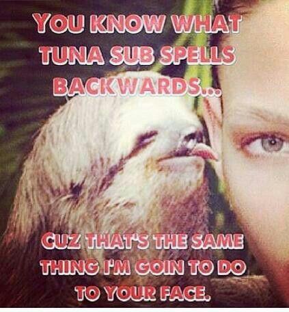 20 Ernsthaft Witzige Faultier Meme Um Ihren Tag Zu Verbessern Ernsthaft Faultiermeme Ihr Sloth Meme Funny Sloth Meme Cute Baby Sloths