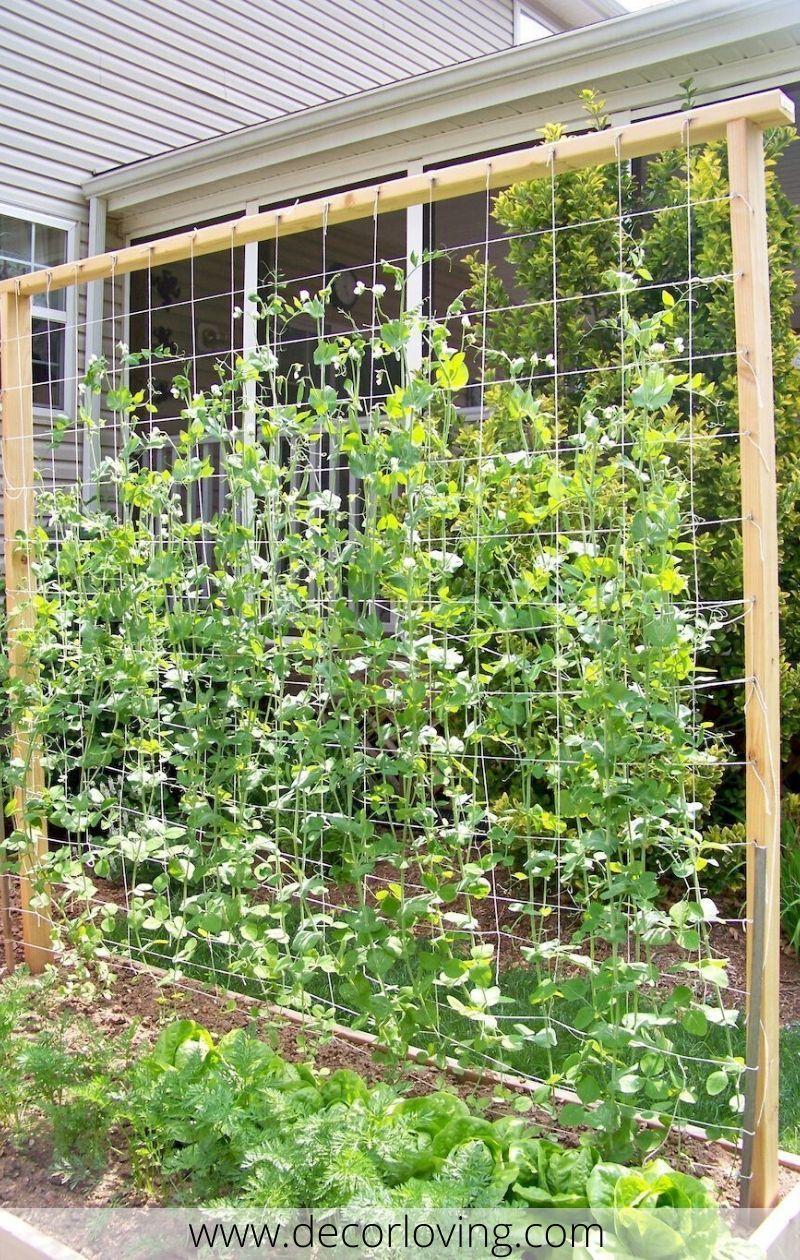 33 Verticle Wooden Trellis Ideas In Garden In 2020 Diy Garden Trellis Vegetable Garden Trellis Garden Trellis