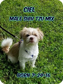 Huddleston Va Shih Tzu Mix Meet Ciel A Dog For Adoption Dog Adoption Kitten Adoption Pets