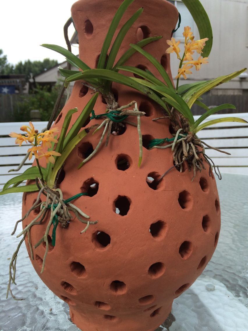 Vanda Orchid In Terracotta Vase Vanda Orchids Growing Orchids Orchid House