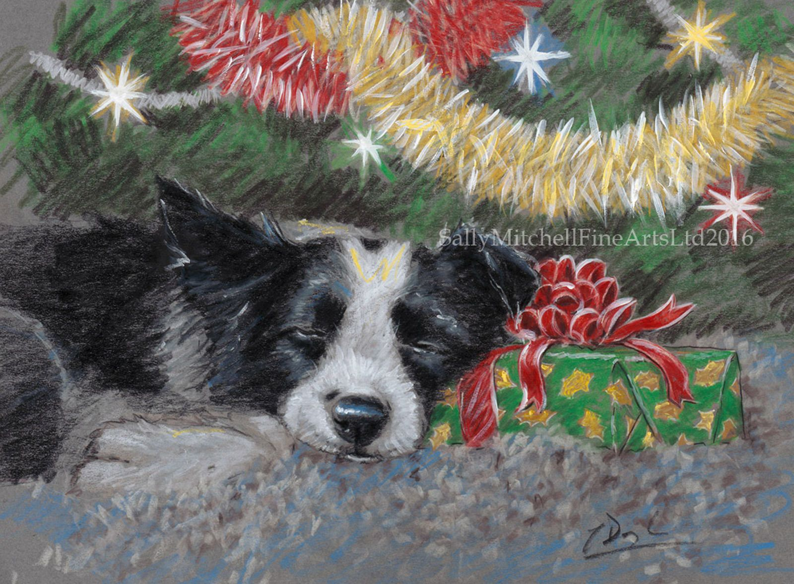 Border Collie Dog, Christmas Cards Pack Of 10 By Paul Doyle. C499X ...