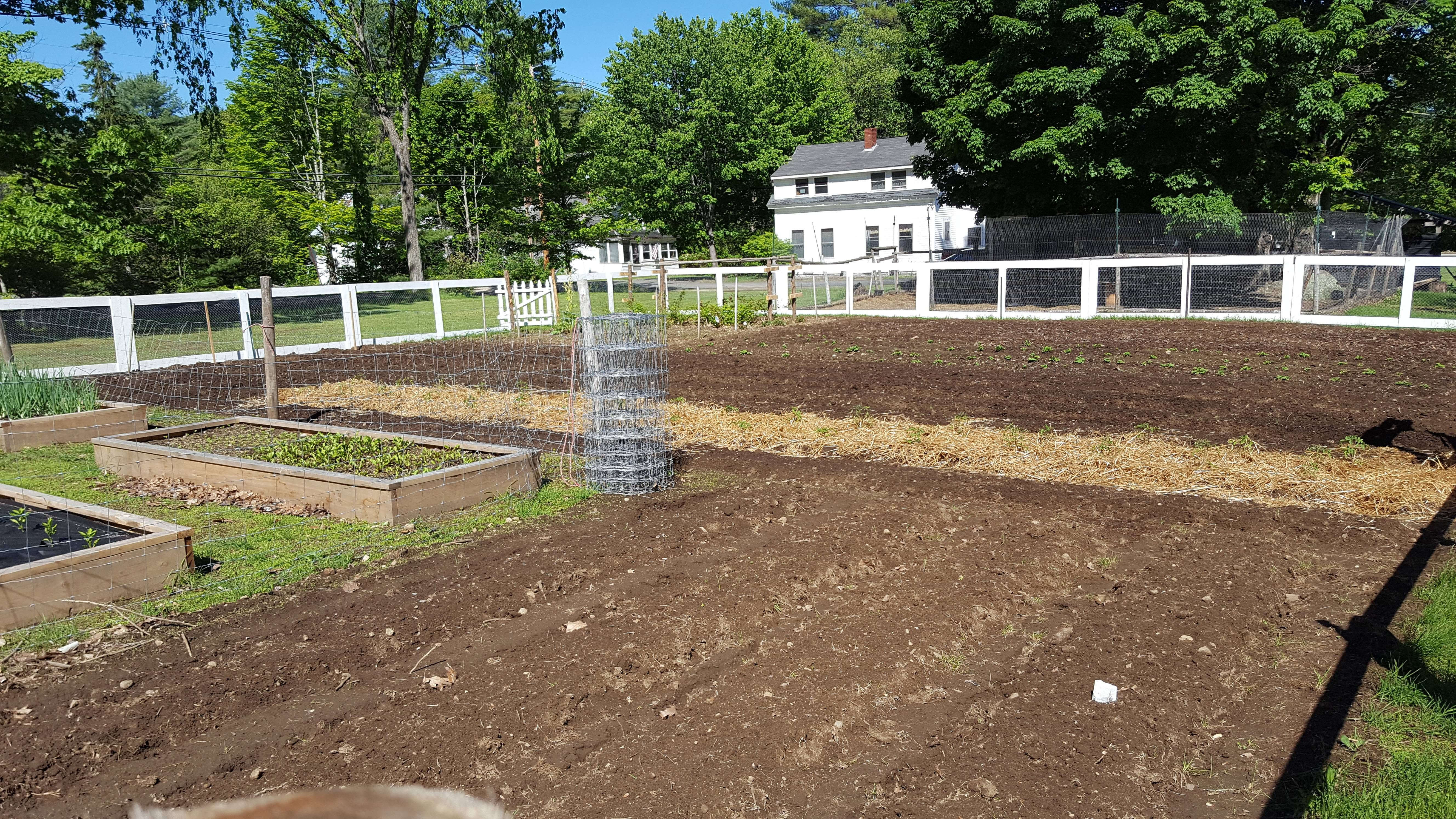 Garden planted and fence installed. I don\'t know how it happened but ...