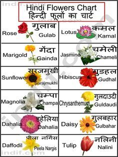 List Of Common Flowers To Print This Chart Right Click On The Chart Below And Click On Print Flower Chart Hindi Language Learning Hindi Alphabet