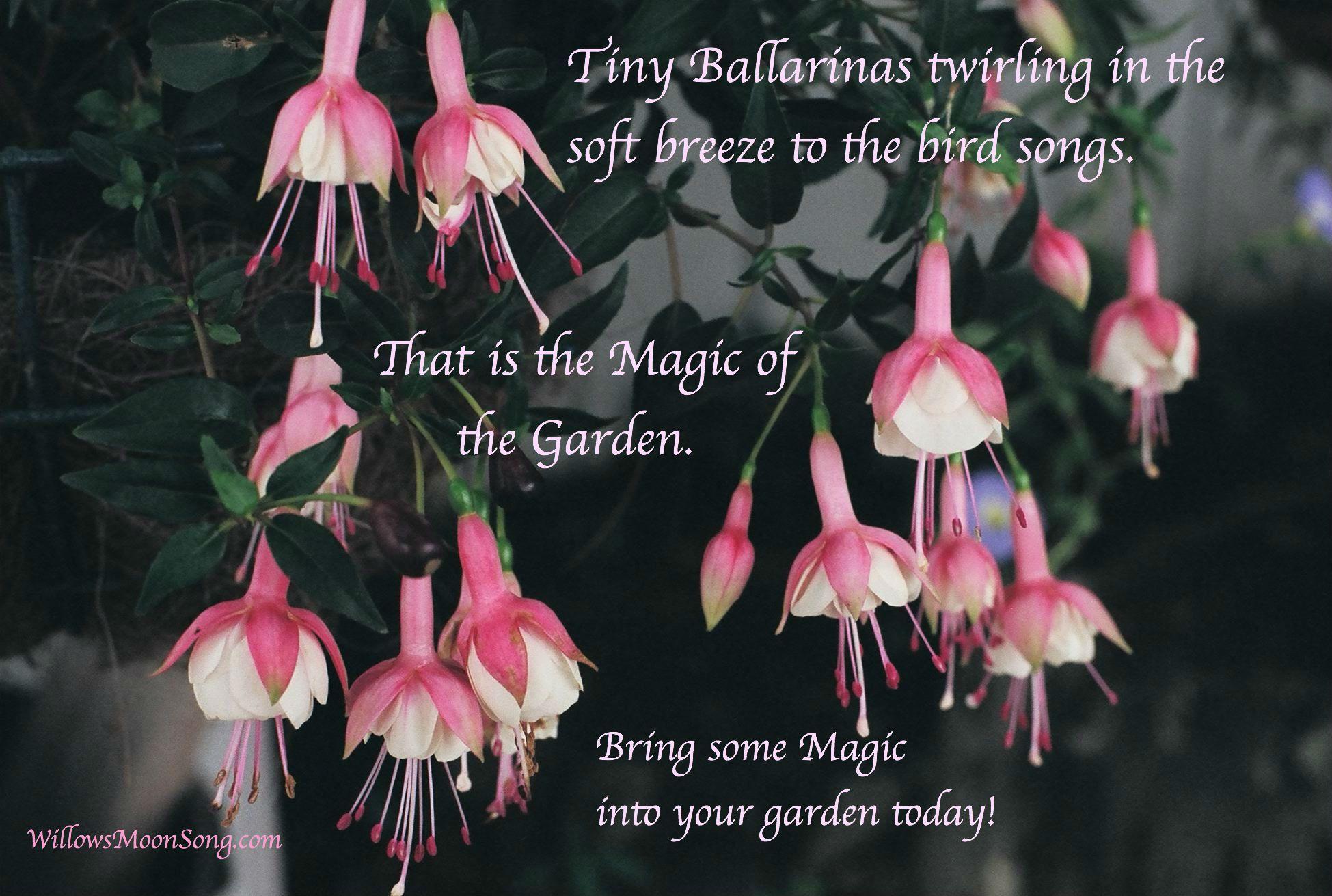 Fuchsia Flowers And Magical Gardens Archeratwood Com Willowsmoonsong Com Fuchsia Flowers Magical Garden Hanging Plants