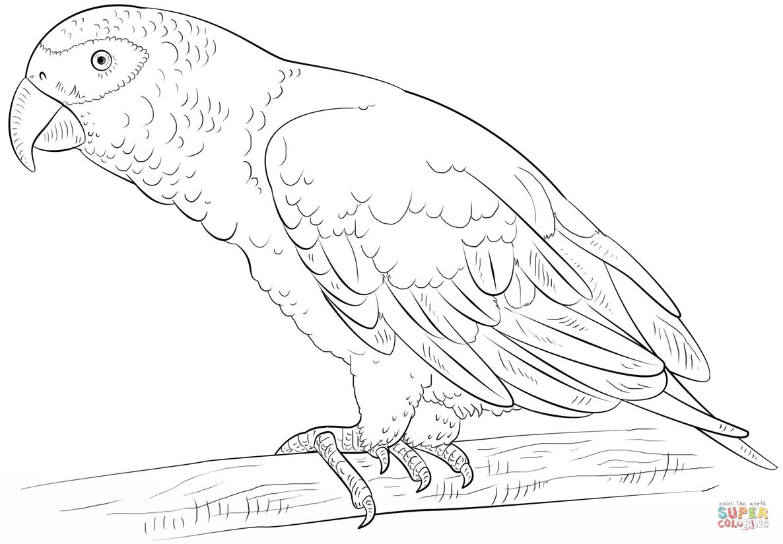 African Grey Parrot | Super Coloring | coloring birds | Pinterest