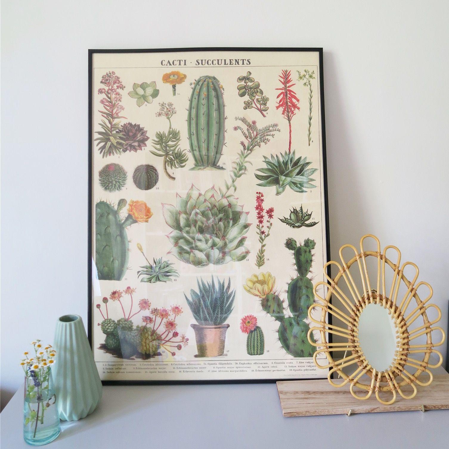affiche vintage cactus et succulentes odette et lulu 01. Black Bedroom Furniture Sets. Home Design Ideas