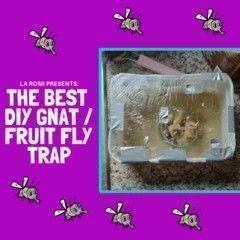 Homemade gnat trap | DIY fruit fly trap | DIY fly killer | tutorial   - Behind T...   - Fruit Ideas - #DIY #Fly #Fruit #Gnat #Homemade #ideas #Killer #Trap #Tutorial #gnats Homemade gnat trap | DIY fruit fly trap | DIY fly killer | tutorial   - Behind T...   - Fruit Ideas - #DIY #Fly #Fruit #Gnat #Homemade #ideas #Killer #Trap #Tutorial #gnats Homemade gnat trap | DIY fruit fly trap | DIY fly killer | tutorial   - Behind T...   - Fruit Ideas - #DIY #Fly #Fruit #Gnat #Homemade #ideas #Killer #Tra #gnats