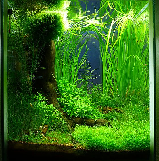 Freshwater Aquascape: Shop Für Naturaquarien