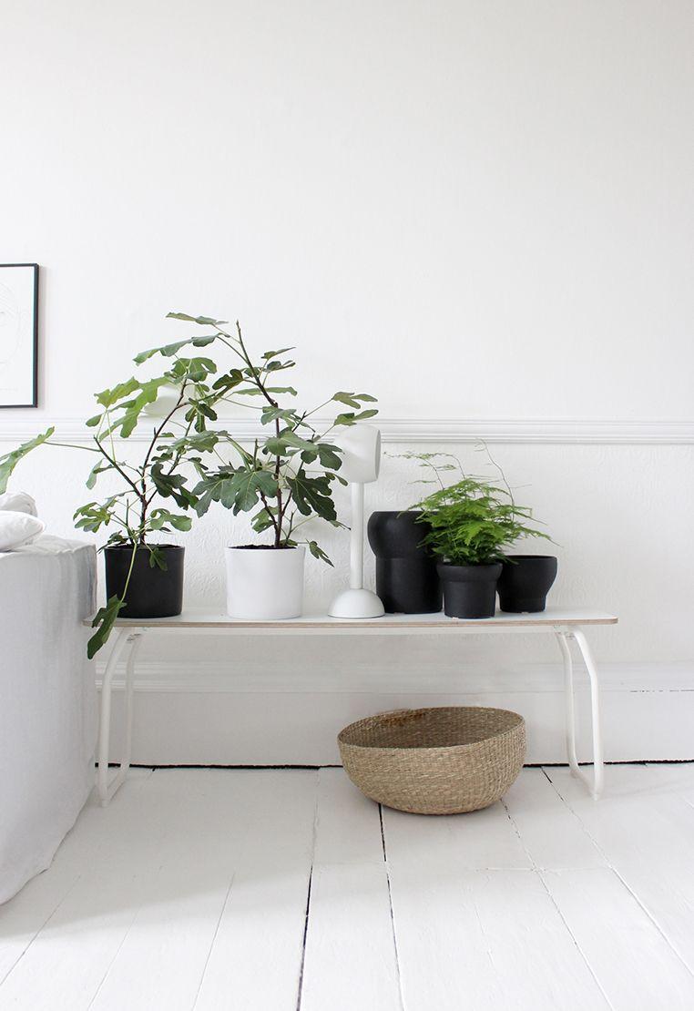 Ikeabank mit pflanzen f rs wohnzimmer neben dem sofa for Zimmerpflanzen wohnzimmer