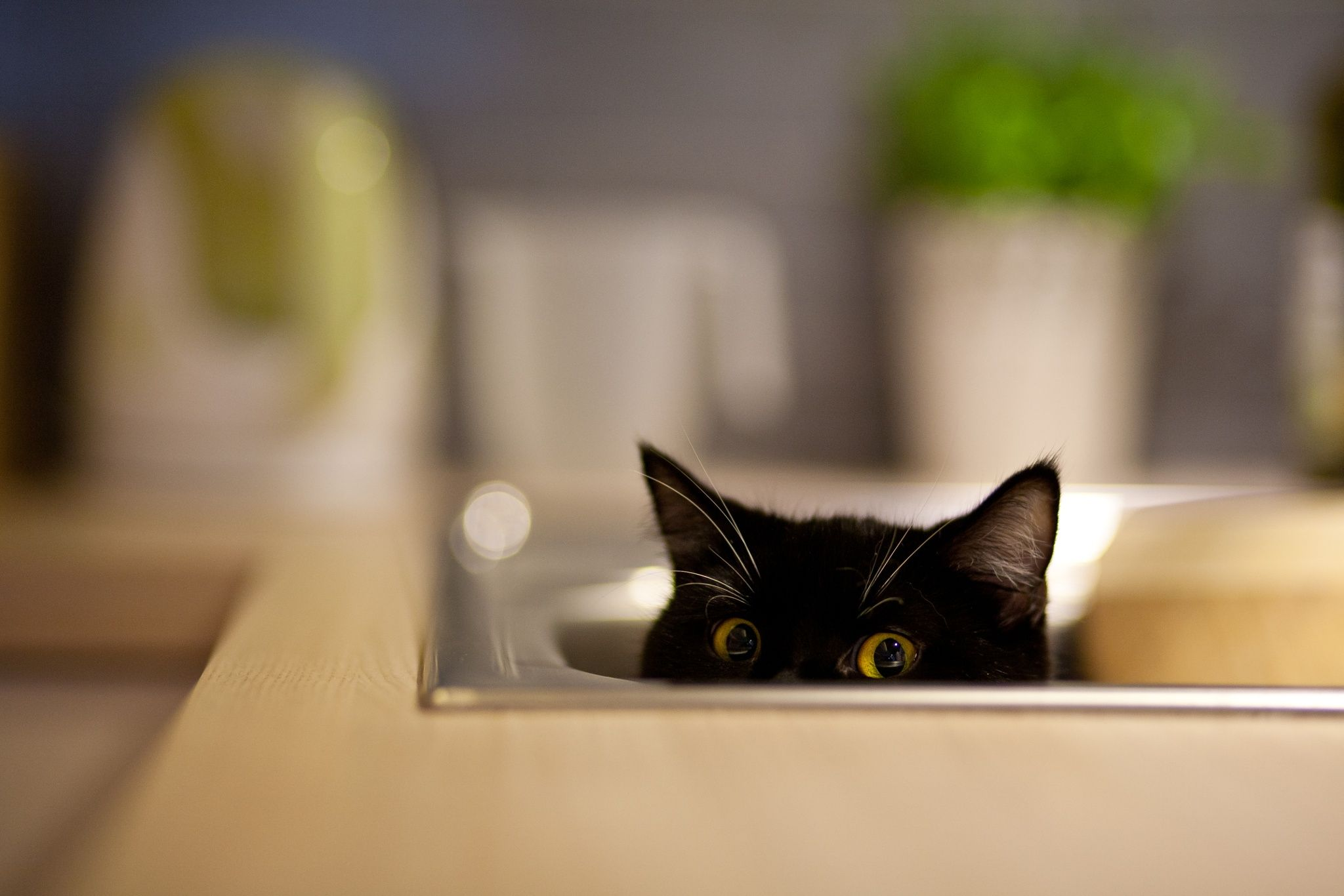 Cat eyes by Artur Owsiany on 500px