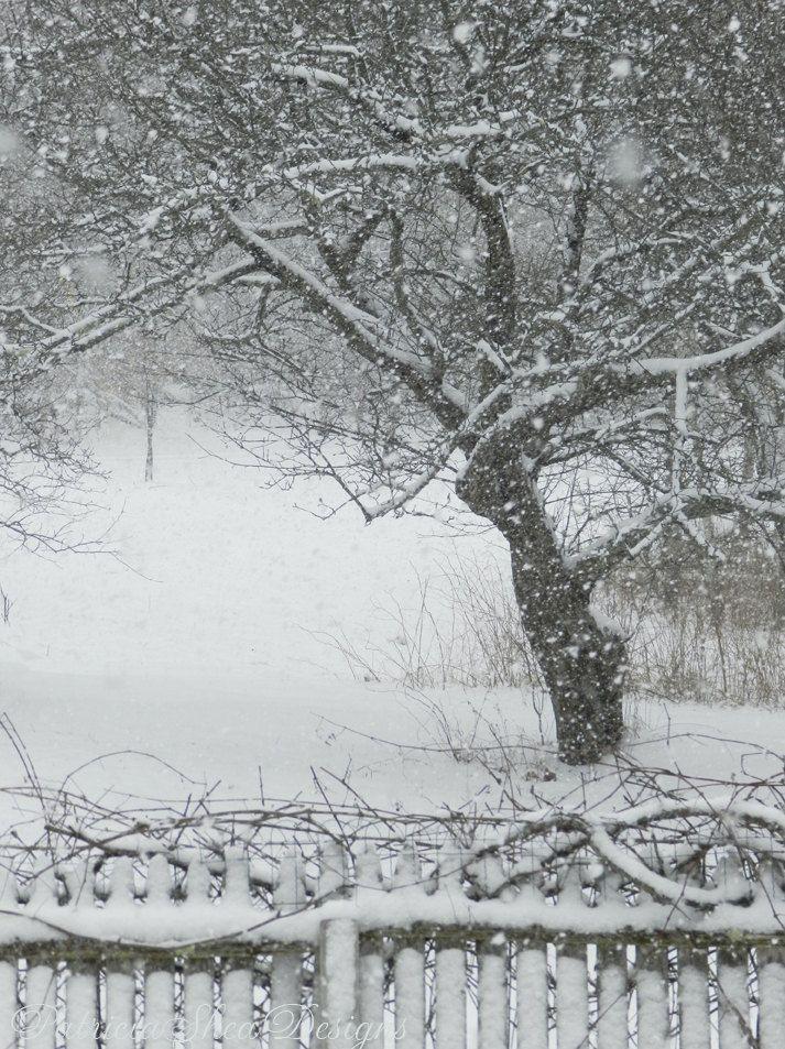 Large Nemo Blizzard photograph apple tree par PatriciaSheaDesigns