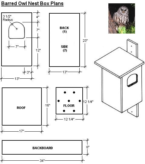 Free easy bird house plan screech owl bird house for Song bird house plans