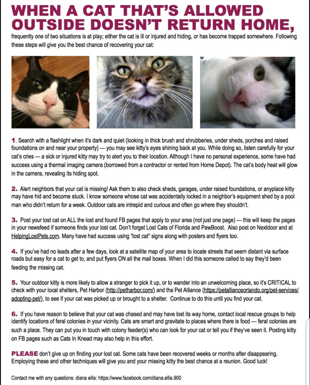 Pin By My Info On Cats Kittens Cats And Kittens The Outsiders