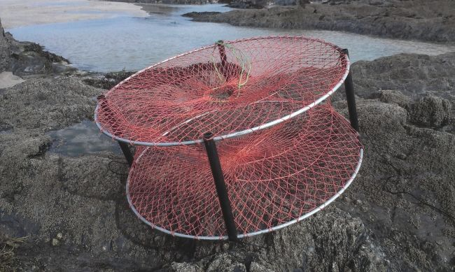 Fold able crab and lobster trap for leisure anglers diy for Diy fish trap