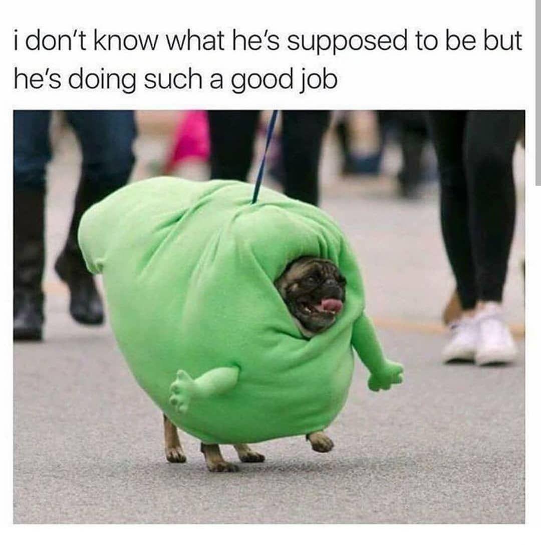 Yes You Look Exactly Like Baby Yoda Good Job Follow Animalmemesunion For More Animalmemesuni Funny Animal Memes Funny Black Memes Funny Animal Pictures