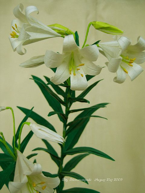 Easter Lily Origami Flower with Flower Bud – Graceincrease Custom ... | 640x480