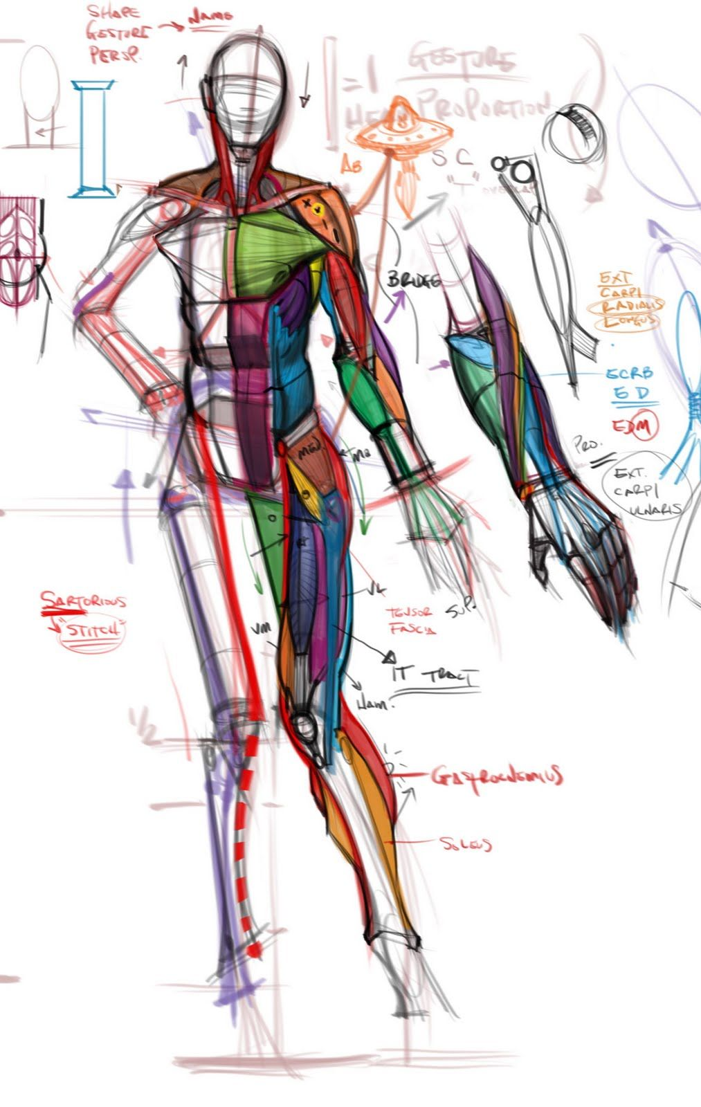 figuredrawing.info_news | cat | Pinterest | Anatomie und Zeichnen