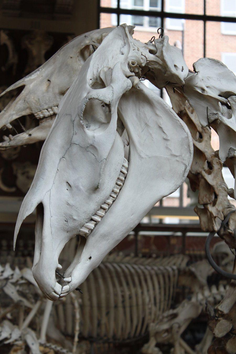 Horse skull 2 by CitronVertStock on DeviantArt   AN_T_MY   Pinterest ...