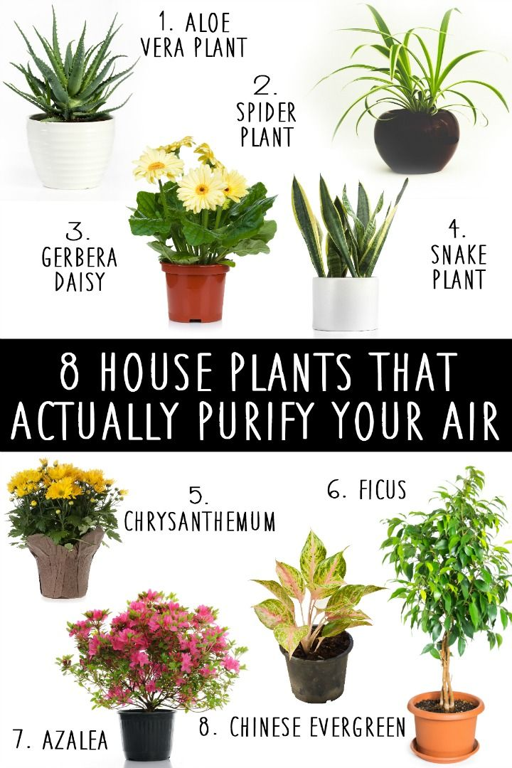 8 House Plants That Actually Purify Your Air https