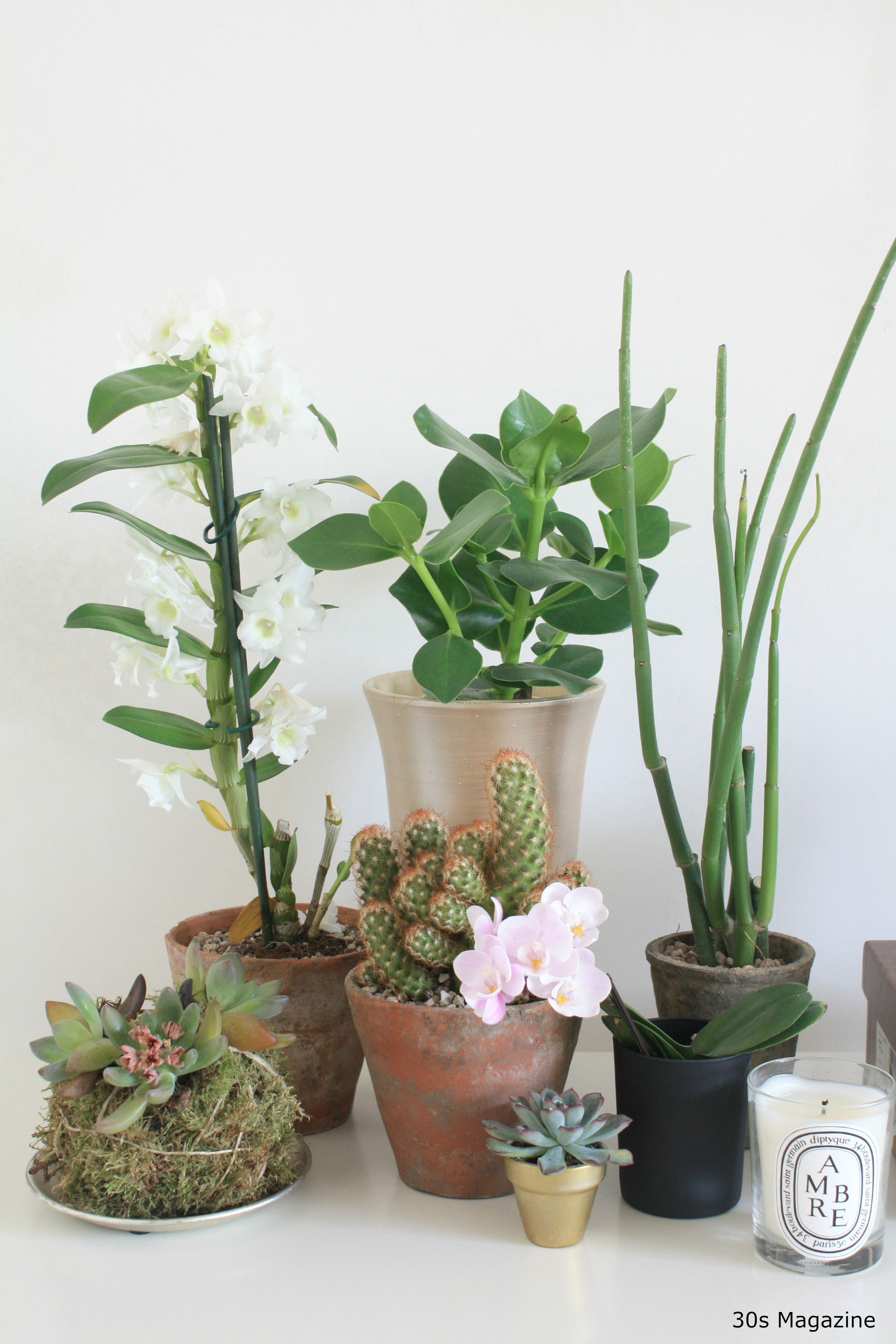A Plant Shelfie in the Bedroom is part of Green bedroom Plants - Do you have plants in your bedroom  I didn't, until I was inspired by the Urban Jungle Bloggers challenge  Plants cheer up every space and purify the air so what better accessory is there to …