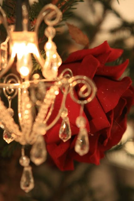 Red roses at Christmas