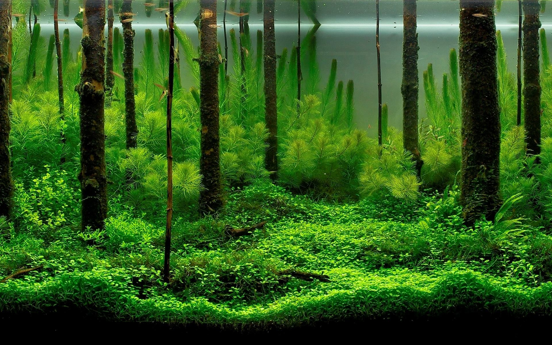best aquarium backgrounds to download print free premium