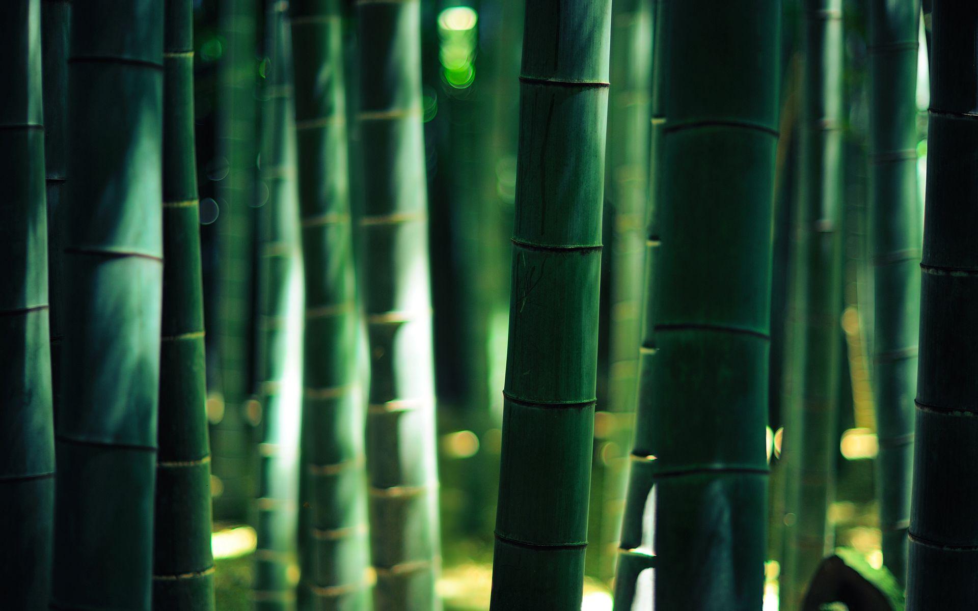 Notre Dame Fighting Irish Stadium Picture For Wallpaper Bamboo