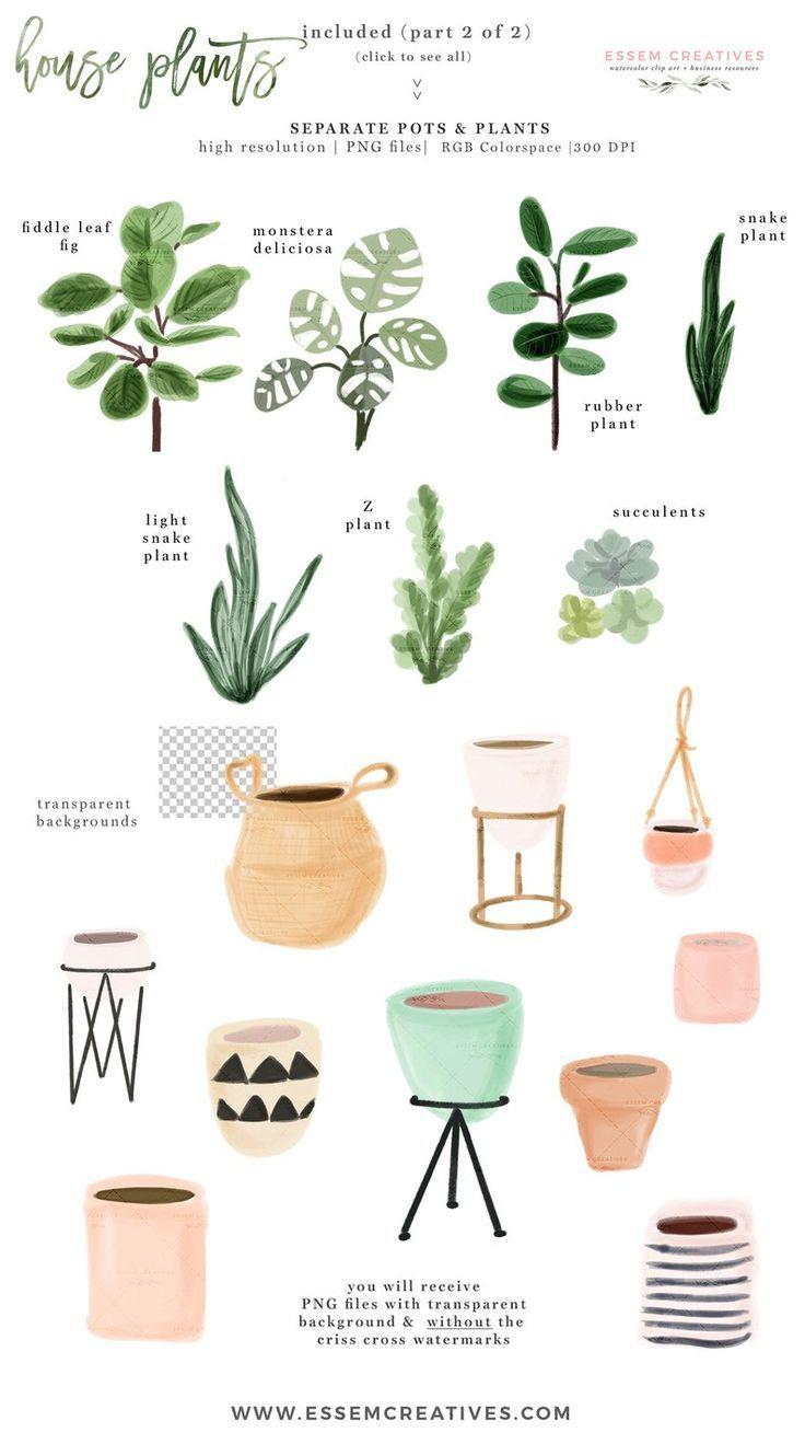 Watercolor House Plants Clip Art Indoor Plants Potted