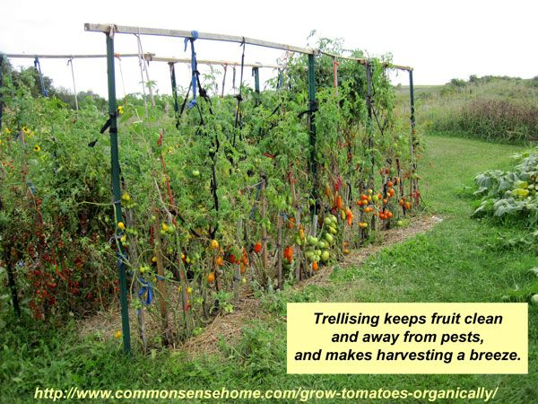 Check Out These Homemade Tomato Trellis Ideas That Are Wind