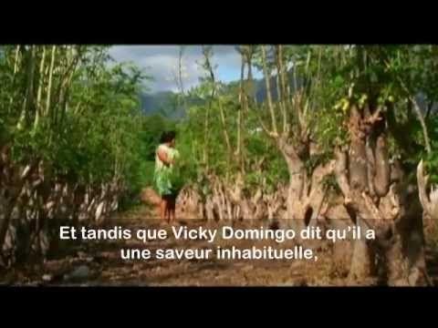Version française c'est quand même plus facile pour les francophones ! Plante magique n°1 : Le Moringa oleifera http://btaillefer.blogspot.fr/2013/03/vous-avez-dit-plantes-magiques.html    Le MORINGA OLEIFERA connaît un certain succès si on en croit le nombre d'articles sur Internet. A juste titre