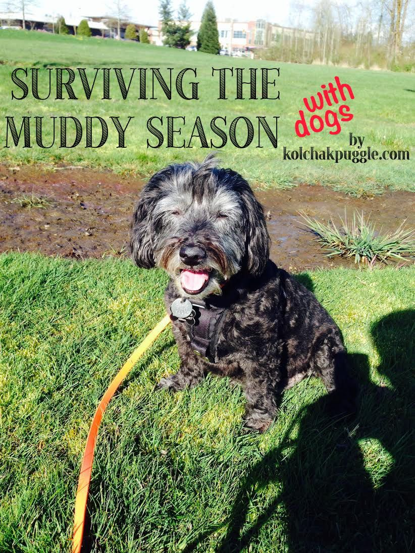 15 Ideas for Surviving the Muddy Season with Dogs Dogs