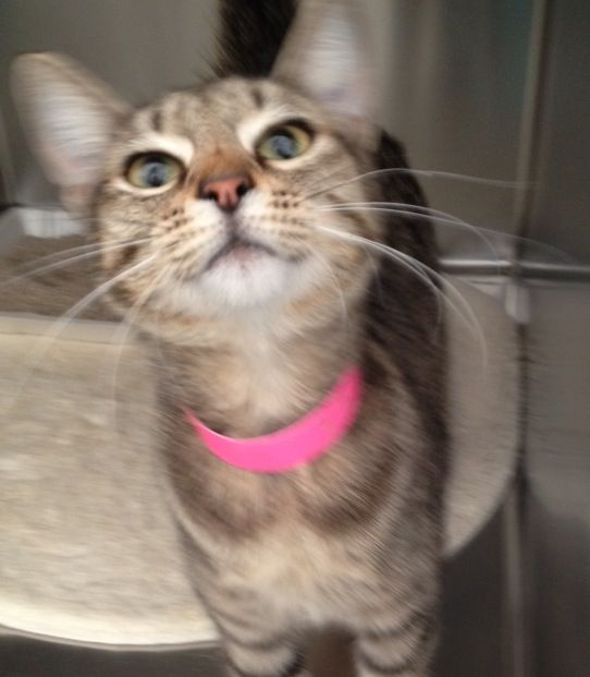 Nevada 9 Month Old Sydney A736692 Can T Wait To Go Home With You Meet Her Today At The Animal Foundation Campus Adoption Cent Animals Animal Shelter Pets