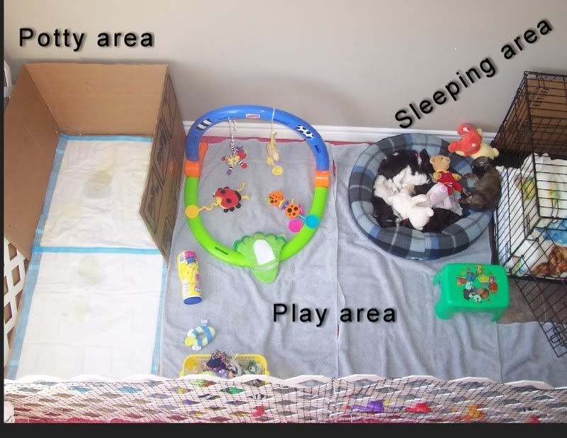 Used Puppy Apartment Thread Puppy Apartment Has Anyone Used This Good Idea Or Bad Dog Playpen Puppy Room Puppy Playpen