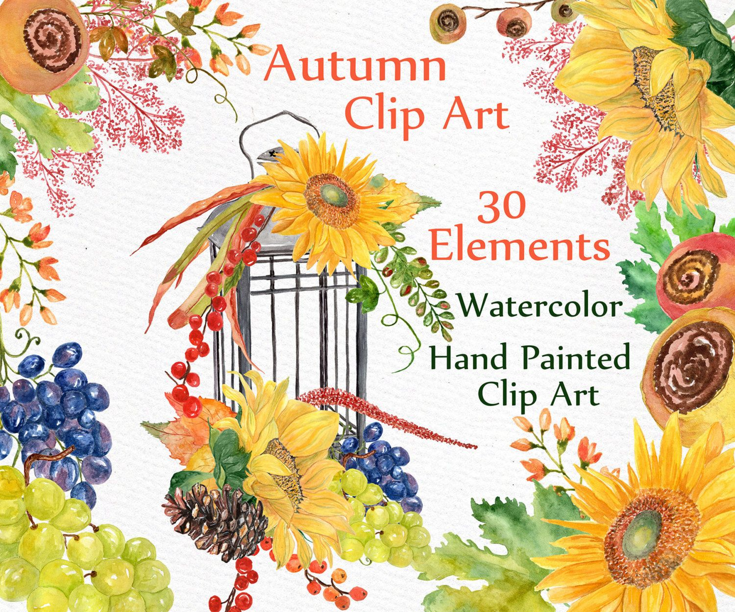Autumn Watercolor Clipart FALL CLIPART Sunflower Grape Harvest Leaves Hand Painted