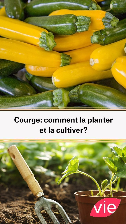 Courge comment la planter et la cultiver? (avec images