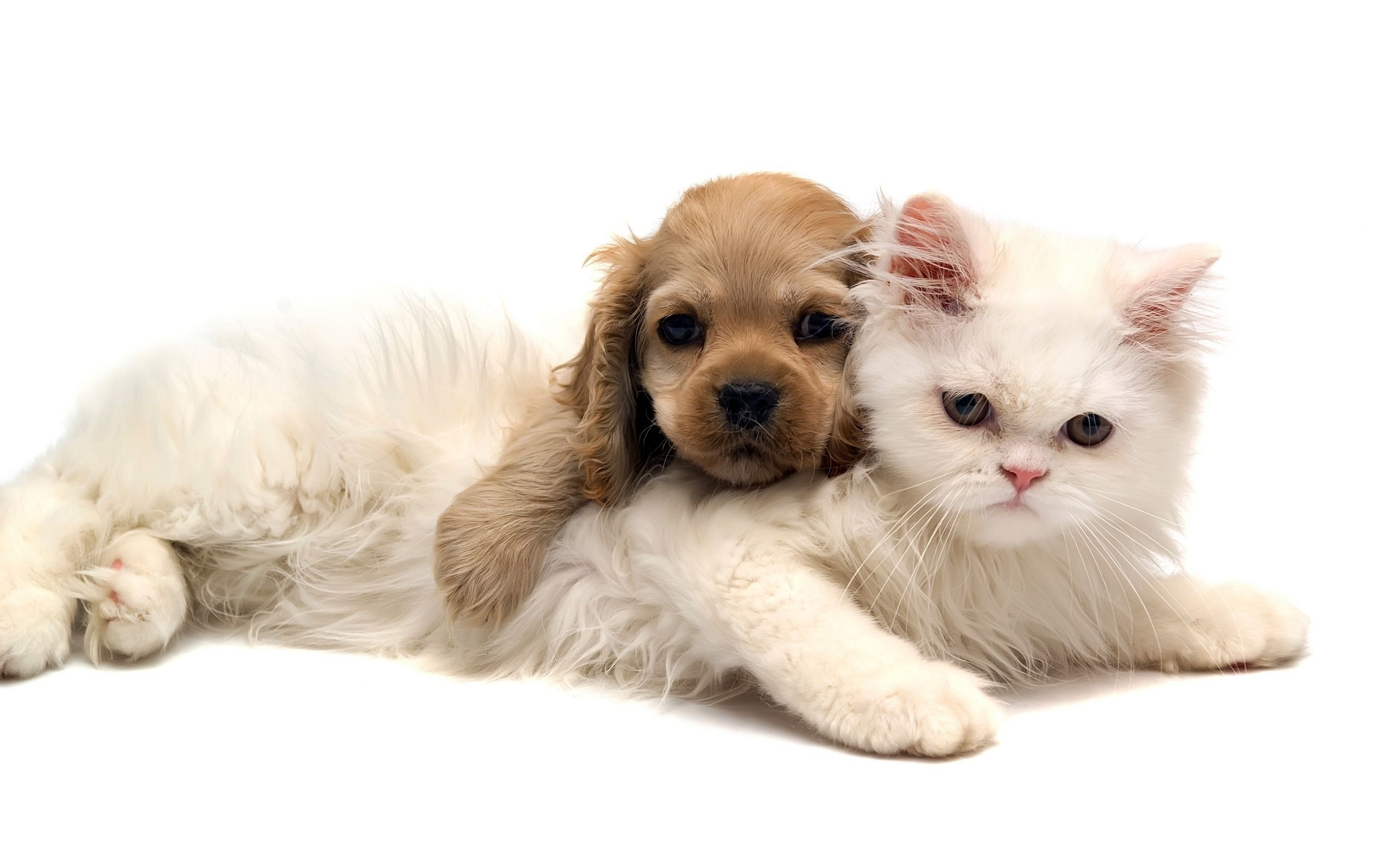 Cute Dog And Cat Wallpaper Wallpapers Backgrounds Images Art Photos Cute Cats And Dogs Kittens And Puppies Cute Puppies