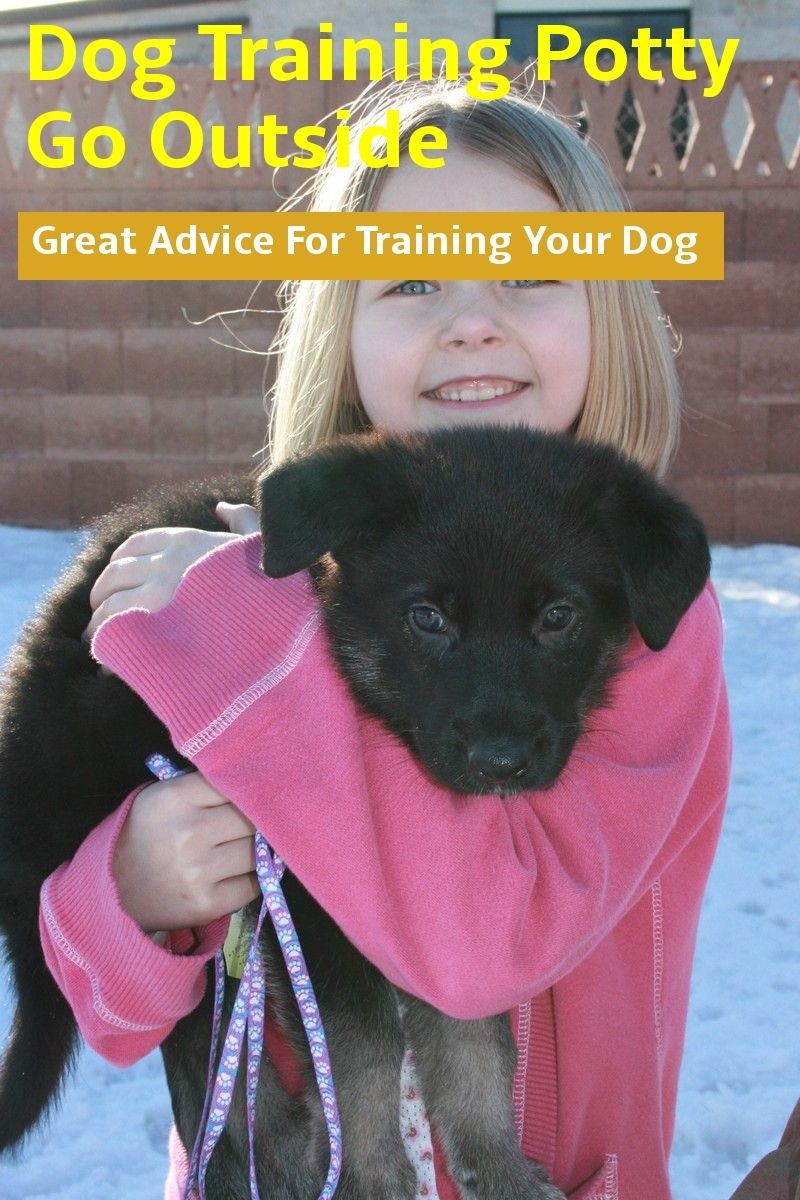 Learn About Dog Training Potty Go Outside With This Article Read More Info By Clicking The Link On The Im Dog Potty Training Dog Training Basic Dog Training