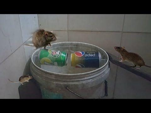 Best mouse trap ever how to make bucket mouse trap youtube astuce pi ges souris pi ges - Piege a souris fait maison ...