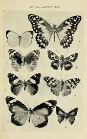 Resultado de imagem para tatuagem no antebraço triangulos jemima kirke