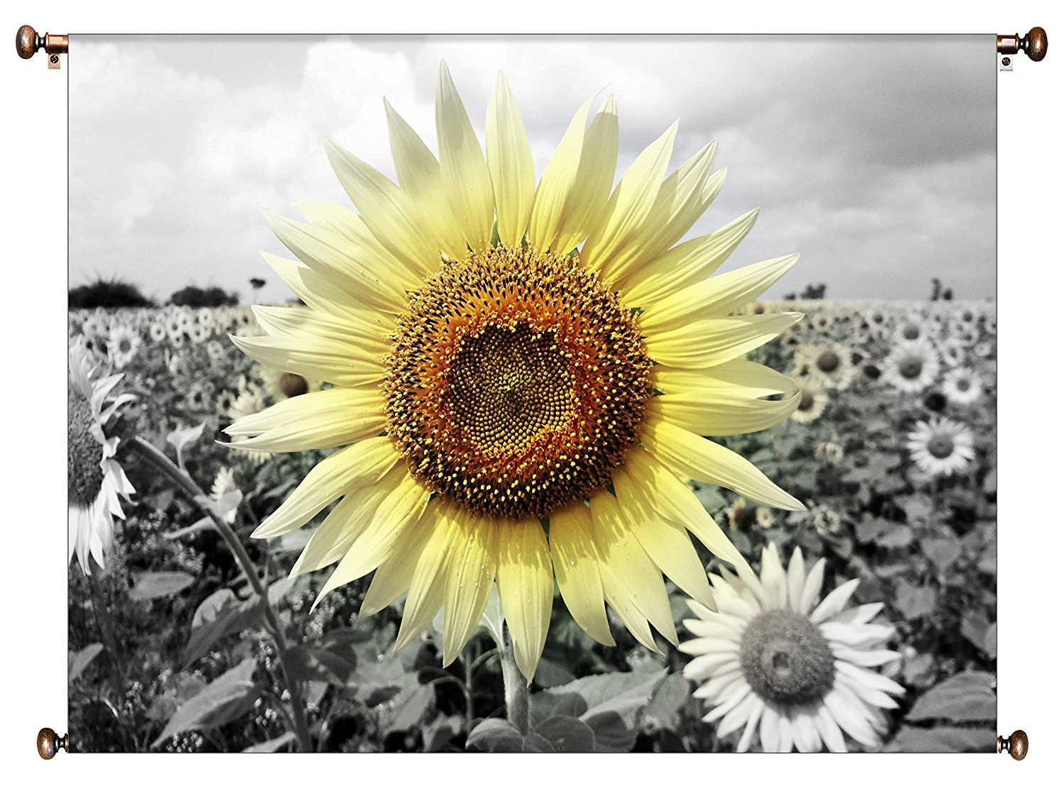 Big sunflower on a farm picture on canvas hung on copper rod ready