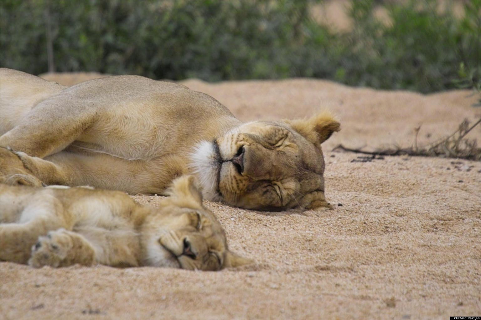 PHOTOS Animal Parents With Their Babies Will Make Your Day - 30 animals cutest parents