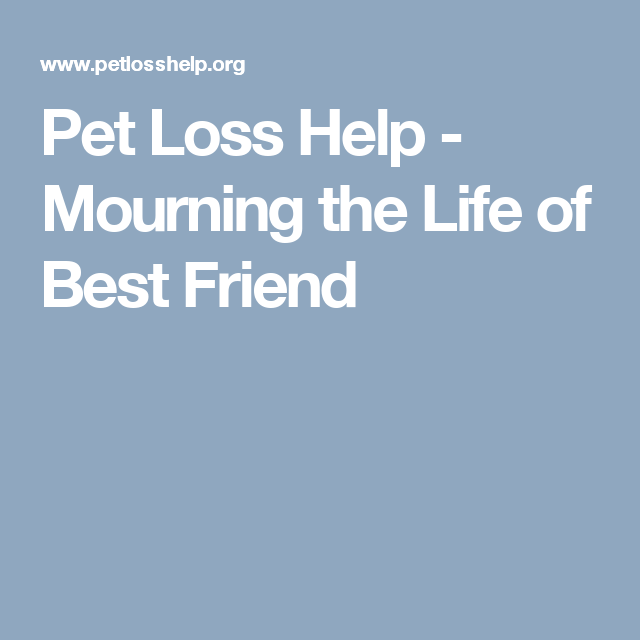 Pet Loss Help Mourning The Life Of Best Friend Best Friends Pet Loss Grief Support