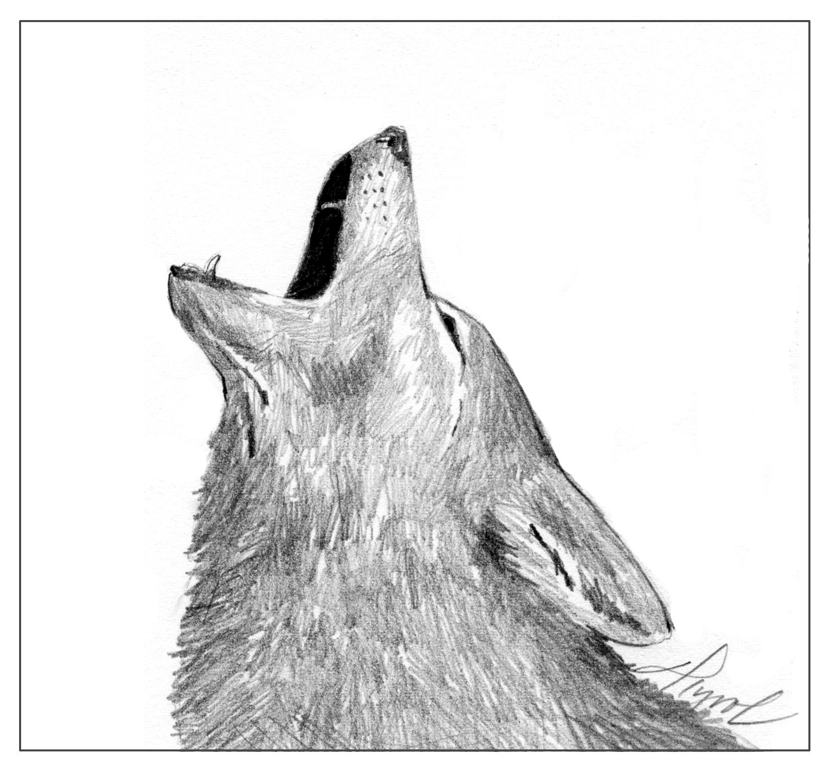 """Coyotes have sometimes been called """"song dogs,"""" and their long ..."""
