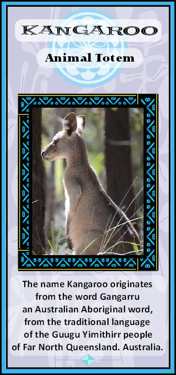 Kangaroo Symbolic Meaning Animal Totems Totem Spirit Animal