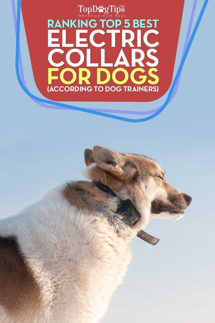 best electric dog collar