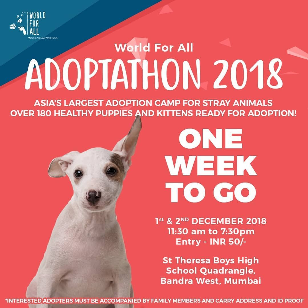 With Over 180 Pups Kitties Seeking Forever Homes Mumbai Hosts Asia S Largest Stray Adoption Camp Healthy Puppy Kittens Puppies