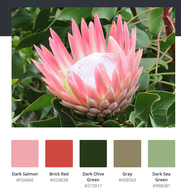 Pin By Trix Hand On Van Inspo In 2020 Color Palette Generator Protea Flower Color Palette